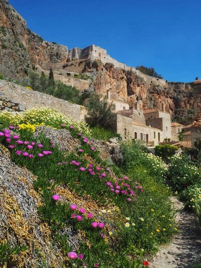 One of the best place ..Monemvasia Greece ...maybe one of the best in Europe Flower Plant Rock - Object Travel Destinations Nature Mountain Outdoors No People Clear Sky Landscape Cliff Day Sky Beauty In Nature Architecture Flower Head