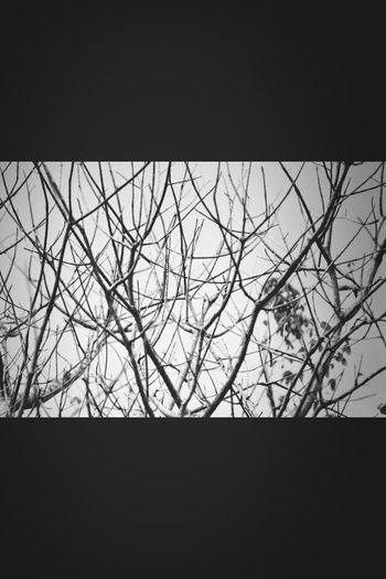 |no leaves on me|