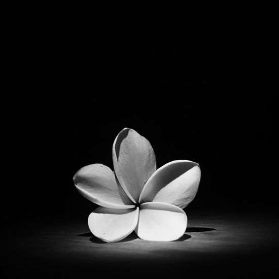 Flower Blackandwhite Showcase: December