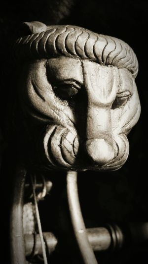 This is the Lion head on my new Cello First Eyeem Photo