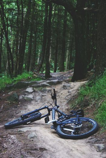 Healey Hills Trees Nature Forest Photography Mountain Bike Dirt
