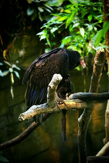 A Vulture and a little black Monkey chatting together...? Animals Birds EyeEm Best Shots Check This Out Observing Nature Nature_perfection Beautiful Nature
