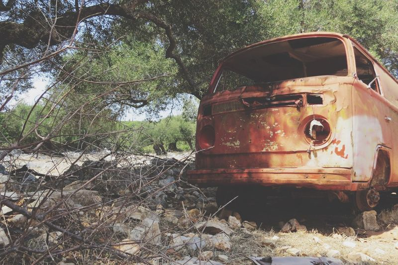 Old Car Tree And Car Wreck Wreckage