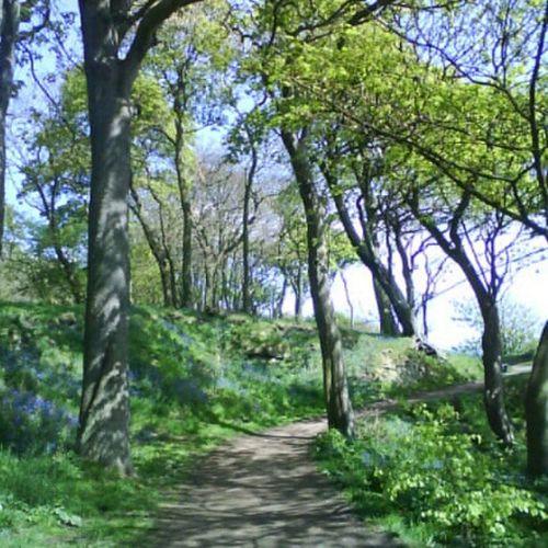 'Ravenscraig' Ravenscraig Kirkcaldy Fife  Scotland Trees Tranquil Nature Woods Photography Instagram NoFilters