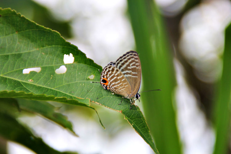 High Angle View Of Butterfly Perching On Leaf