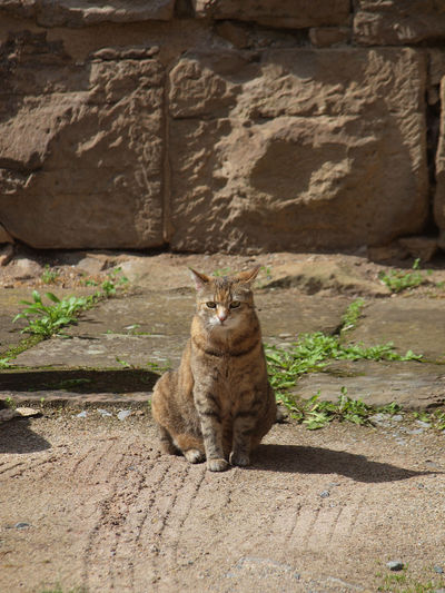 Mammal Cat Domestic Cat Feline Animal Themes One Animal Animal Pets Vertebrate Domestic No People Domestic Animals Sitting Relaxation Day Nature Wall - Building Feature Full Length Sunlight Wall Whisker Tabby