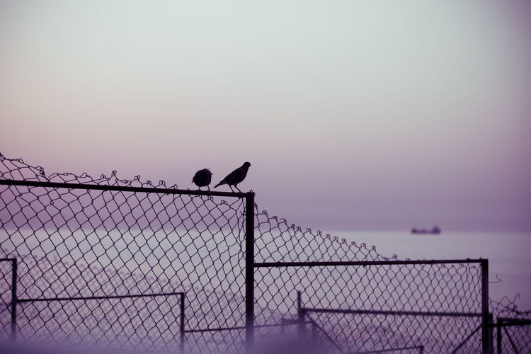 Birds perching on fence against sky during sunset