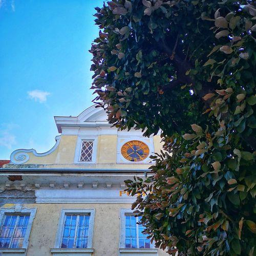 Tree Clock Sky