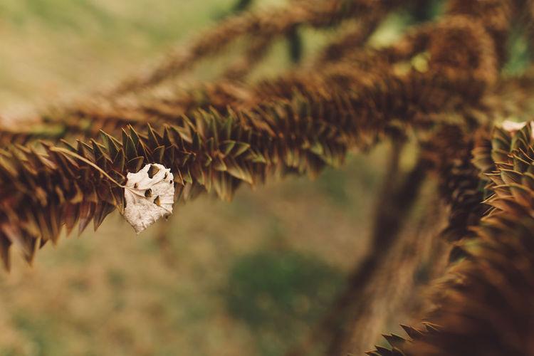 Leaf On Dried Plant