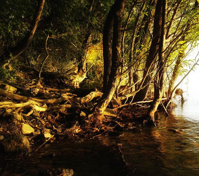 Balaton Beach Forest Hungary Lake Lake Balaton Mystery Nature Outdoors Plant Seeing The Sights Summer Tree Woods