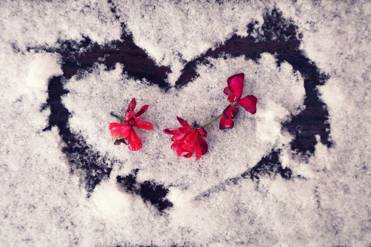 Close-up Day Decoration Flower Flowers Flowers In The Snow Fragility Heart On Snow High Angle View Isolated Color Nature No People Outdoors Red Red Flowers Snow Three Always Be Cozy