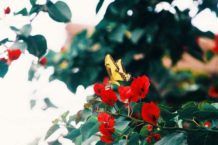 Tree Flower One Animal Animals In The Wild Focus On Foreground Freshness Insect Nature Butterfly VSCO Vscocam Primavera