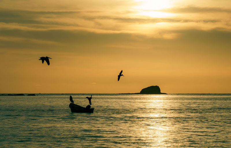 Silhouette birds flying over sea against sky during sunset