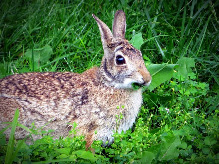 Having a Snack Bunny  Bunny! Imhuntingwabbits Nature Wildlife Animalkingdom