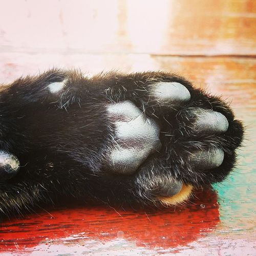 Black is the new pink! Kitten Paw Black Hand Soft Fur Pet Hairry