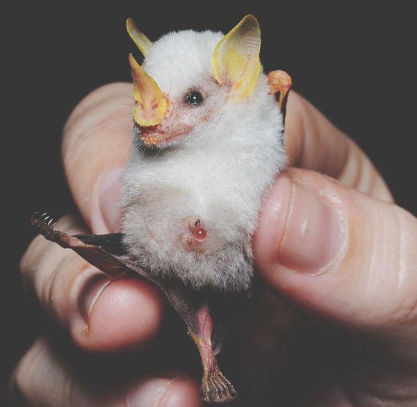 Bats Stolen Shot Internet Animals