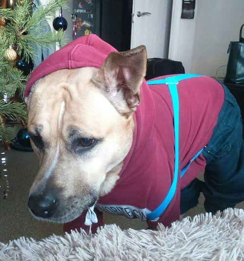 Hello World Bonifaci Dog Pet Love My Dog  мойхозяинидиот Thebestfriend