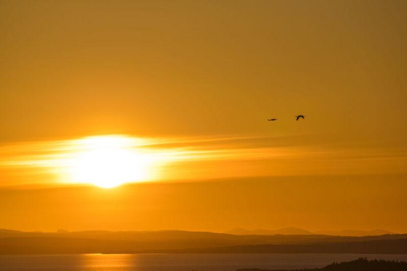 Silhouette bird flying over sea against orange sky