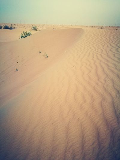 Sand Dune Desert Arid Climate Backgrounds Landscape Beauty In Nature The Great Outdoors - 2017 EyeEm Awards