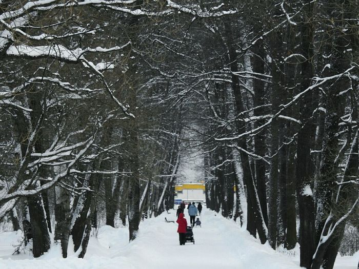 Cold Temperature Snow Winter Forest Beauty In Nature Tree People Udelnii Park Winter Frozen Colors Of Sankt-Peterburg Sankt-Petersburg Russia