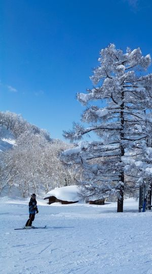 Winter fun Wintersport Winter Wonderland Ski Tree Snow Winter Cold Temperature Tree Plant Leisure Activity Nature Beauty In Nature Mountain Blue Scenics - Nature Snowcapped Mountain