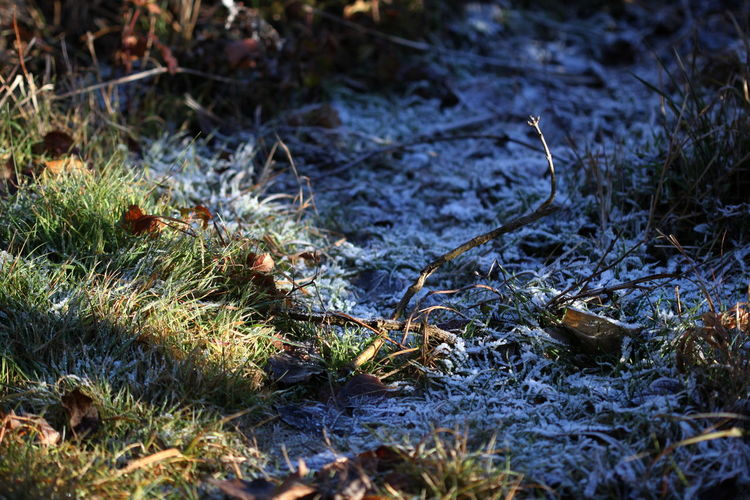 Close-up December 2015 Frost Grass Morning Nature No People Outdoors Rabland,sudtirol Sunlight And Shadow Wintertime