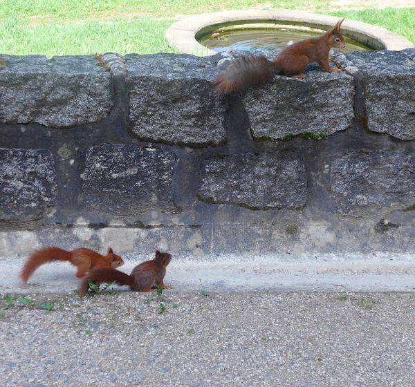 Mrs. Squirrel and her kids Offspring Spring Park Animal Animal Themes Mammal Vertebrate Domestic Animals Day Nature Outdoors Animals In The Wild Field Animal Wildlife