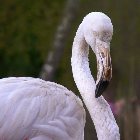 Flamingo Eyemphotography EyeEm Birds Walking Around Throughmyeyes Eyem Nature Lovers  Birds_collection Pink BirdsColours Of Nature Femalephotographerofthemonth wildlife photography