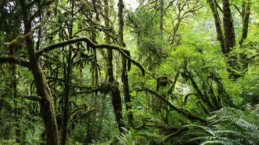 Trees And Fern Plants Growing In Rainforest