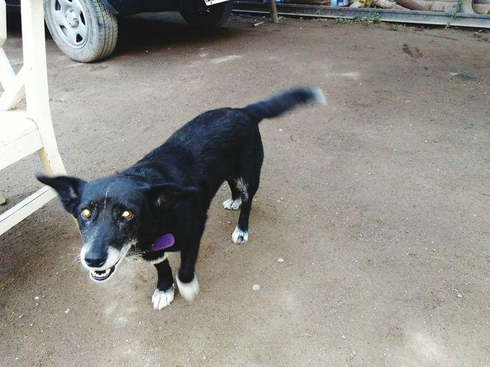 enana.... con calor Domestic Animals Dog Animal Themes Pets One Animal Mammal Black Color