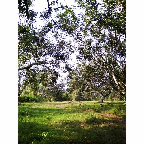Do you know what ,In this place So amazing becouse there many Green in Jambi,Indonesia