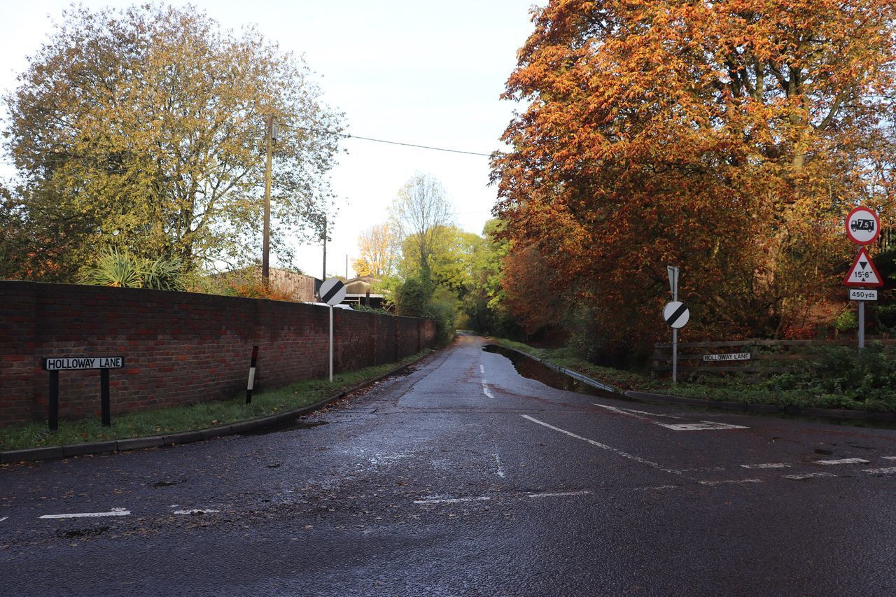 road, tree, autumn, direction, transportation, plant, the way forward, change, nature, sign, day, no people, city, street, diminishing perspective, sky, symbol, outdoors, road marking, marking