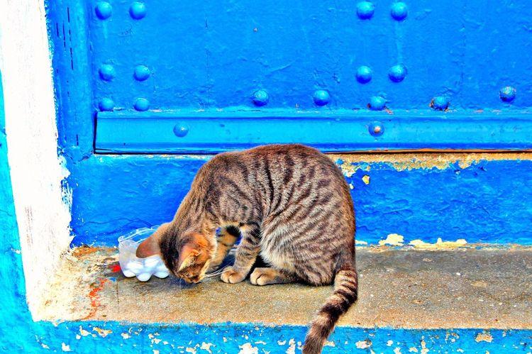 Cat Somewhere Morocco 🇲🇦 Mercy