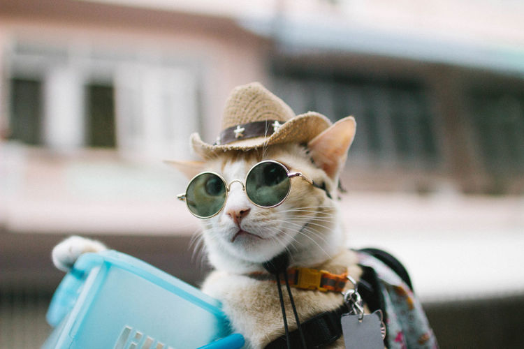 Cat Animal Pets One Animal Focus On Foreground Day Portrait Animal Head  Animal Themes Domestic Cat Domestic Animals Cowboy Cowboy Cat