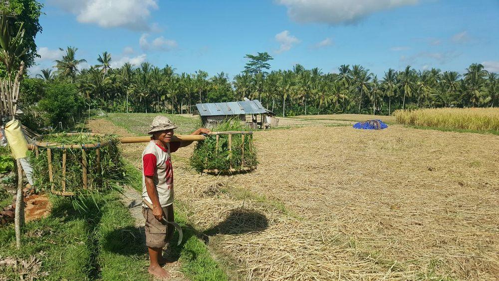 Bali Ubud Galaxys6 Ricefields INDONESIA Landscape