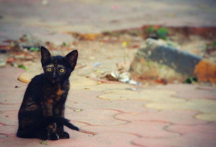 Cute Cat 😻 Little Kitty Stray Cat Street Photography Animal In The City Animal Welfare Cat Cat♡ Black Cat Straycat Animals