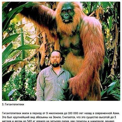 супер пупер обезьяна