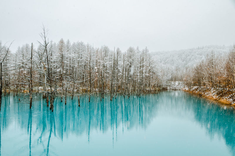 Snow covered trees reflecting in blue pond against clear sky