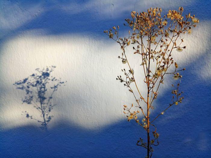 Flowering plant against blue sky