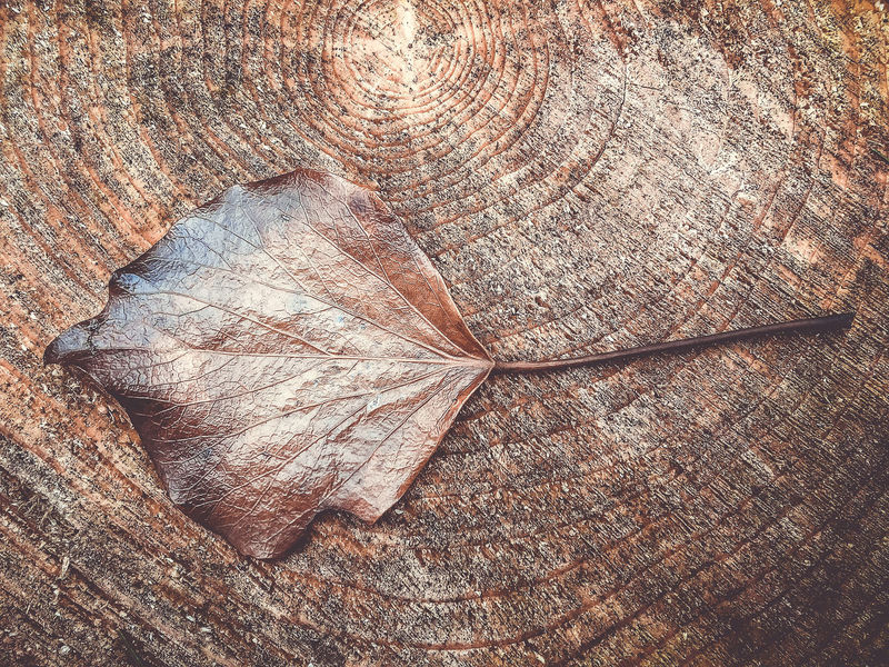 leaf on tree Animal Backgrounds Bark Brown Close-up Day Full Frame High Angle View Natural Pattern Nature No People Outdoors Pattern Plant Plant Part Rough Textured  Tree Tree Ring Tree Stump Wood - Material