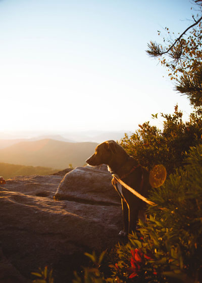 Dog beside plant on rock against sky