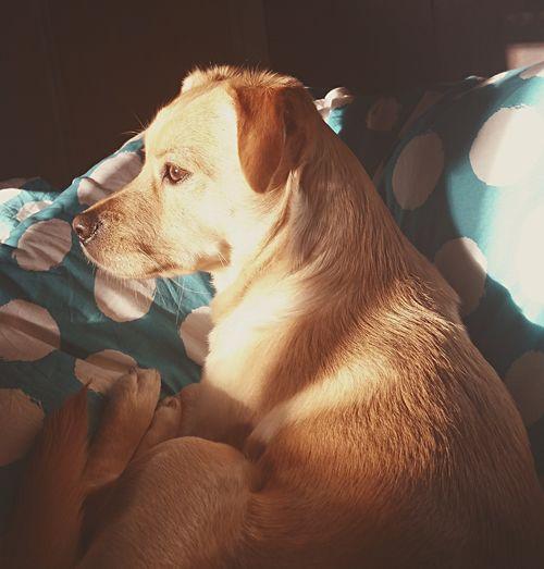 Dog No People Beautiful ♥ I Love My Dog Pets Dog Lovers🐾 Dog Eyes Lovly Dog