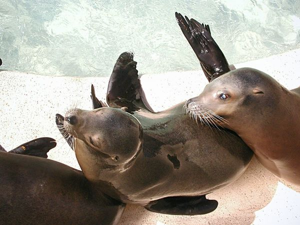 Baby Seals Seal Seals Sealion  Sealions Zoo Zoology Slippery Whiskers Animal Photography Wet ZooLife Beautiful Textures And Surfaces Aquatic Reflection No People Animals Togetherness Animal Themes Love