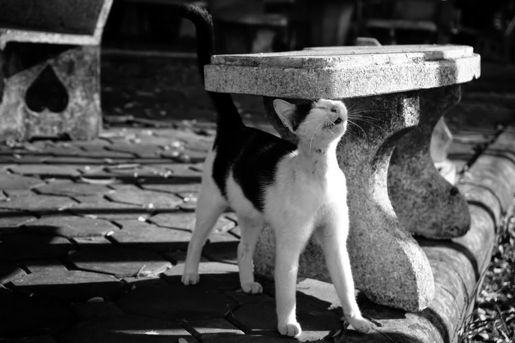 Close-up of cat sitting on bench