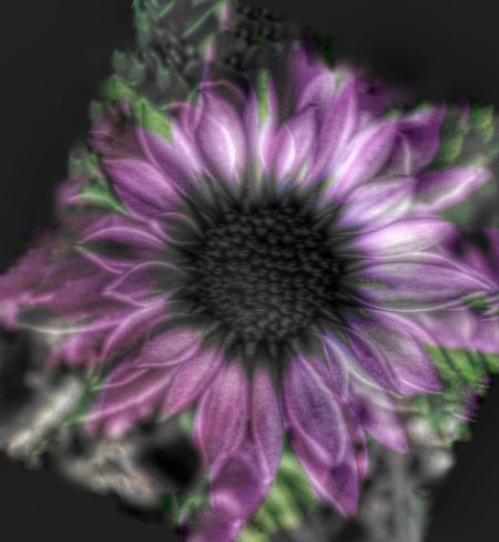 Overlay Editing Experimental Photography EyeEmNewHere Pink Flower Purple Fragility Growth Plant Petal Flower Head Nature Beauty In Nature