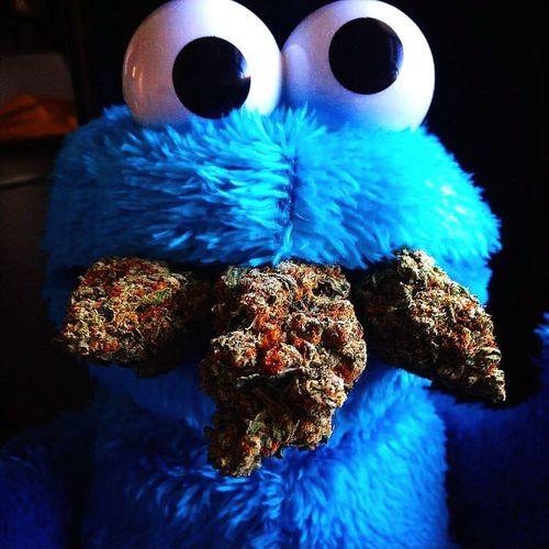 Amsterdam #Sesamstraat 420 #WeedPorn Smoke Weed Cookiemonster Ganjaporn Smokeweedeveryday VanillaKush STONERS LIFE  Ganja Love Bud Rolling Joints Aint No Problem