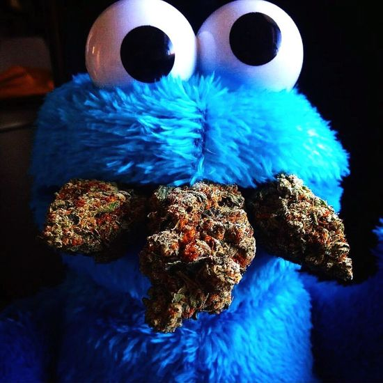 Amsterdam #Sesamstraat 420 #WeedPorn Smoke Weed Cookiemonster Ganjaporn Smokeweedeveryday VanillaKush STONERS LIFE  Ganja Love Bud Rolling Joints Aint No Problem