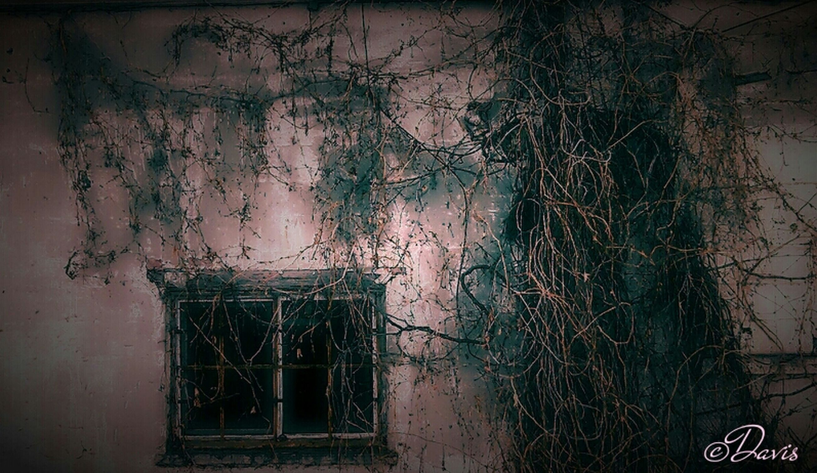 architecture, built structure, building exterior, window, house, wall - building feature, door, abandoned, plant, old, residential structure, wall, closed, residential building, ivy, no people, damaged, growth, obsolete, day