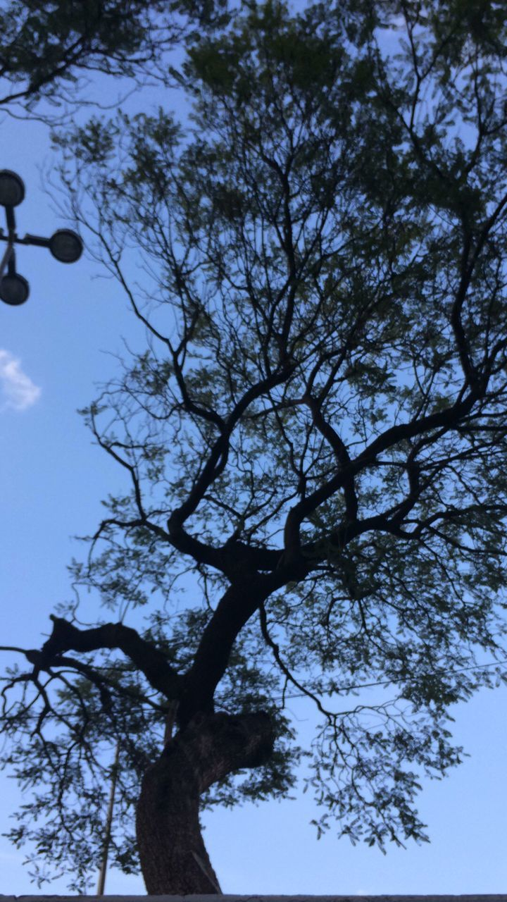tree, low angle view, branch, nature, outdoors, sky, no people, growth, day, beauty in nature