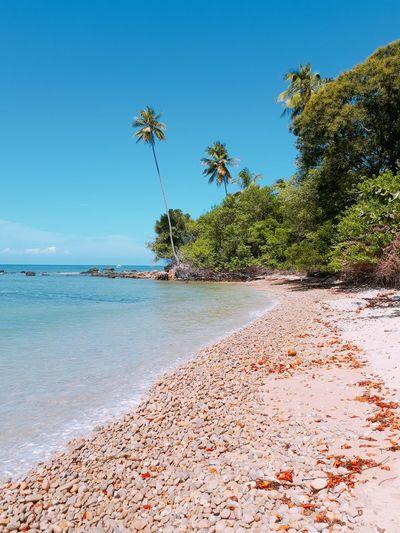 Praia em Boipeba EyeEm Selects Beach Sand Sea Tree Palm Tree Tropical Climate Island Beauty In Nature Tranquility Vacations Nature Travel Destinations